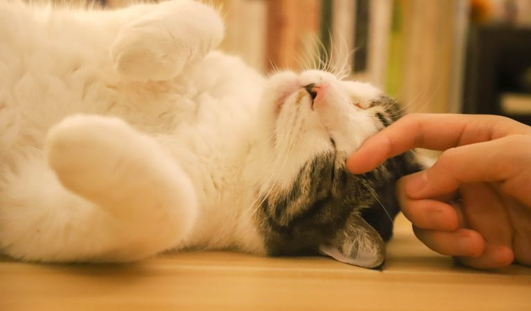 Make Your Cat Happy With These Cat-Parenting Tricks